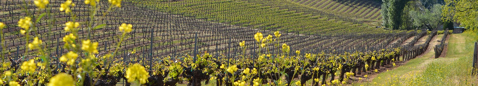 Lava Cap Winery Photo